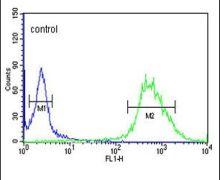 CP054 Antibody (PA5-24693)