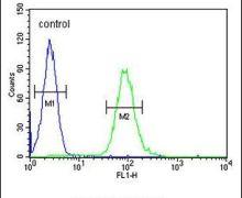 GM-CSF Antibody (PA5-24184)