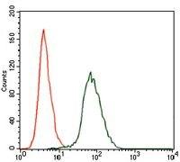 CK2 alpha-2 Antibody (MA5-17062)