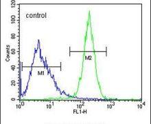 CWC22 Antibody (PA5-24276)