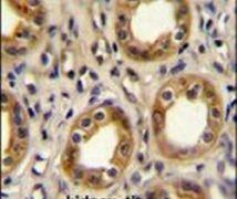 CXCR3 Antibody (PA5-23679)