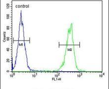 CYP2A7 Antibody (PA5-23979)