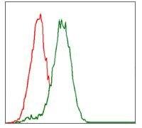 CYP3A4 Antibody (MA5-17064)