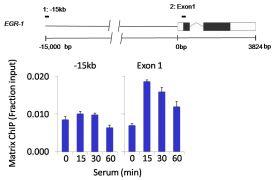 CK2 alpha Antibody (LF-MA0223)