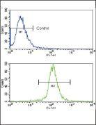 Caspase 3 Antibody (PA5-14504)