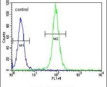 DAAM1 Antibody (PA5-24326)