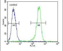DC13 Antibody (PA5-24840)