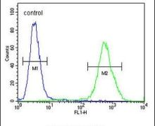 EXO5 Antibody (PA5-23980)