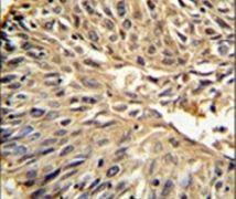 DHFR Antibody (PA5-14267)