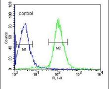 DIPA Antibody (PA5-26129)