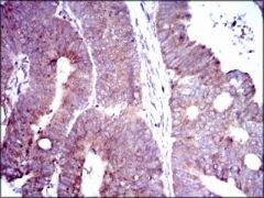 DLL4 Antibody (MA5-17069)