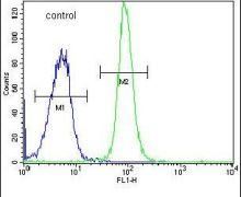 DONSON Antibody (PA5-25568)