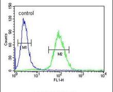 DPP8 Antibody (PA5-13431)