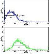 Desmoglein 2 Antibody (PA5-14904)