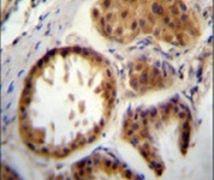 E2EPF Antibody (PA5-11973)