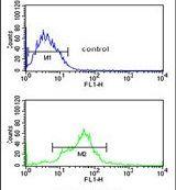 EBP1 Antibody (PA5-12467)