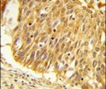 EEFSEC Antibody (PA5-26085)