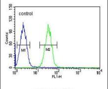 EFHC2 Antibody (PA5-26761)