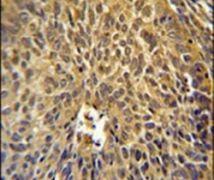 eIF3g Antibody (PA5-25261)
