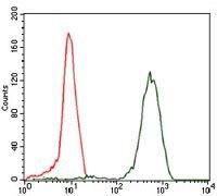 eIF4B Antibody (MA5-17071)