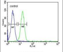 EMX2 Antibody (PA5-25456)