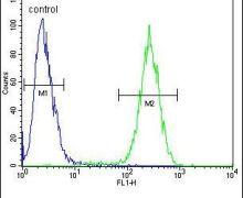 ENSA Antibody (PA5-23958)