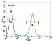ENTHD1 Antibody (PA5-23839)