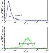 ENTPD2 Antibody (PA5-26333)