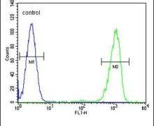 ENTPD3 Antibody (PA5-24209)