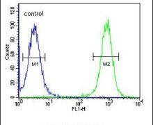 EPC2 Antibody (PA5-25141)