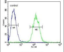ETS1 Antibody (PA5-24211)
