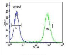EXOC3L2 Antibody (PA5-24947)