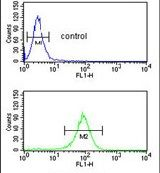 EXOC5 Antibody (PA5-26024)