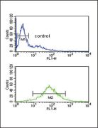 EZH2 Antibody (PA5-24594)