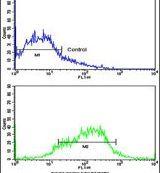 EphA1 Antibody (PA5-14572)