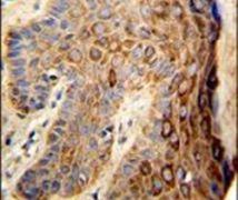 FAM96B Antibody (PA5-26377)