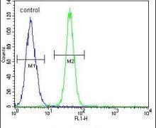 FBXO24 Antibody (PA5-24487)