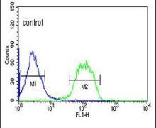 FBXO3 Antibody (PA5-26203)