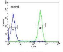 FBXW12 Antibody (PA5-23773)