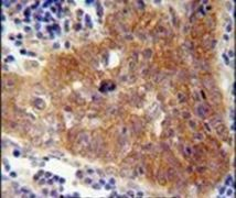 FBXW8 Antibody (PA5-24212)
