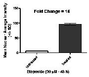 CellEvent™ Caspase-3/7 ( Cat. No. C10423): Multiple Fold increase in signal with treated cells vs non treated