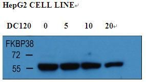 FKBP8 Antibody (PA5-25881)