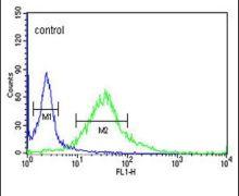 Fibromodulin Antibody (PA5-26250)