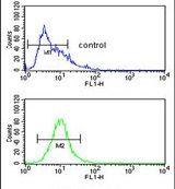 FUT1 Antibody (PA5-13515)
