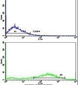 Fascin Antibody (PA5-13696)