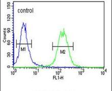 GALR1 Antibody (PA5-26355)