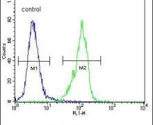 GAL Antibody (PA5-25649)