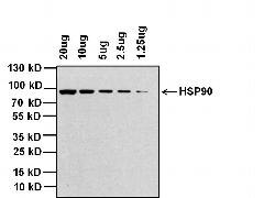 Rabbit IgG (H+L) Cross-Adsorbed Secondary Antibody (G-21234)