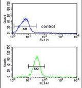 GCLM Antibody (PA5-26111)