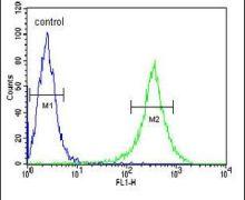 GNE Antibody (PA5-25238)